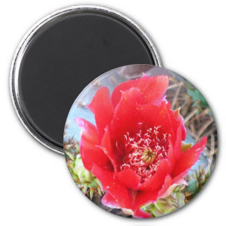 Red Prickly Pear Bloom Refrigerator Magnets
