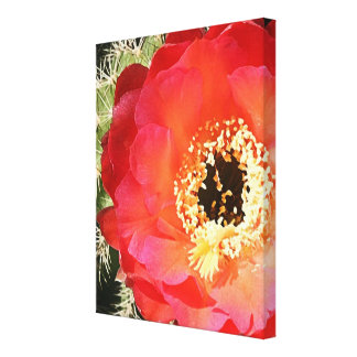 Red Prickly Pear Blossom Canvas Prints