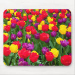 Red, purple, yellow tulip mousepad