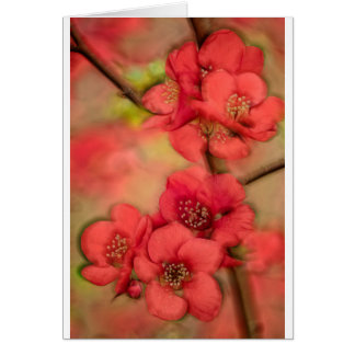 Red Quince Blossom Card