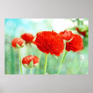Red Ranunculus Flowers Print