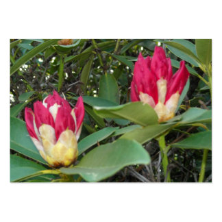 Red Rhododendron Buds Closeup Pack Of Chubby Business Cards