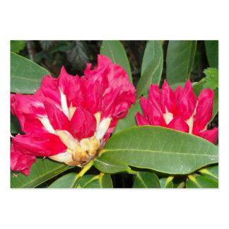 Red Rhododendron Buds Opening Business Card Templates