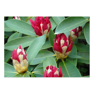 Red Rhododendron Buds Pack Of Chubby Business Cards
