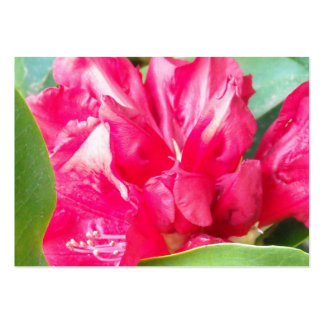 Red Rhododendron Flowers Closeup Business Card Template