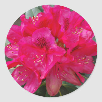 Red Rhododendron Stickers