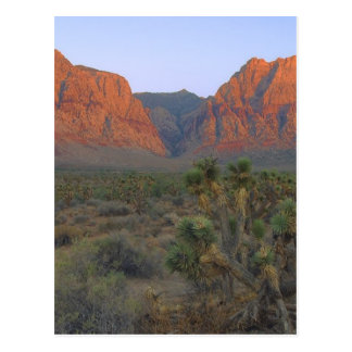 Red Rock Canyon National Conservation Area Postcard