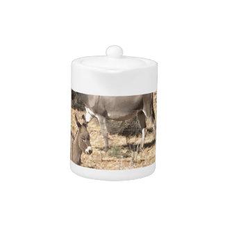 Red rock state park nv donkey