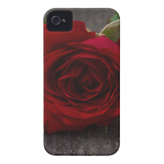 red rose background iPhone 4 cover