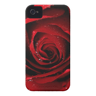 Red rose barely there iphone 4 case