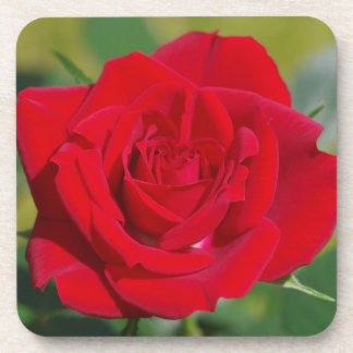Red Rose Beauty Drink Coasters
