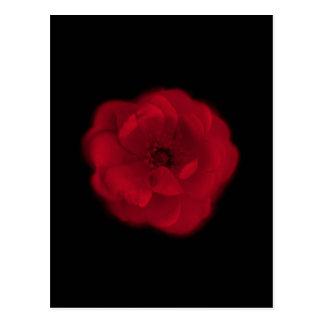Red Rose. Black Background. Postcard