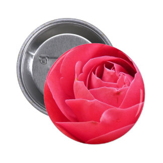 Red Rose Bloom Pinback Button