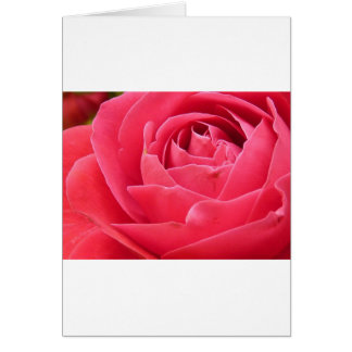 Red Rose Bloom Greeting Card