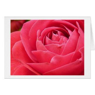 Red Rose Bloom Card