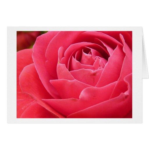 Red Rose Bloom Cards