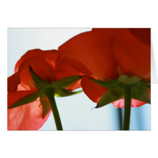 Red Rose Bottom Card