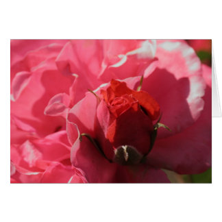 red rose bud card