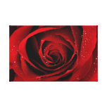 red rose canvas stretched canvas prints