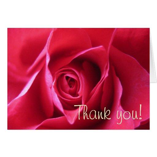 Red rose greeting card