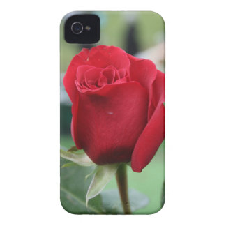 Red rose iPhone 4 cases