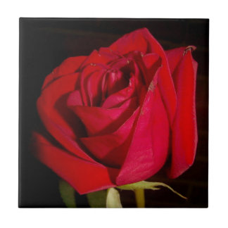 Red Rose Ceramic Tile