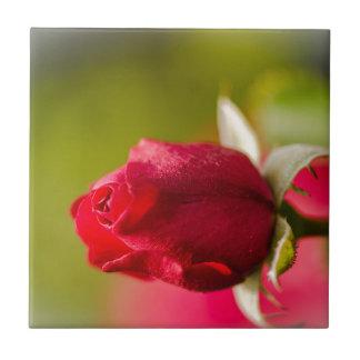 Red rose close up design ceramic tile