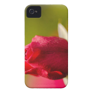 Red rose close up design iPhone 4 case