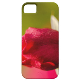 Red rose close up design iPhone 5 cases