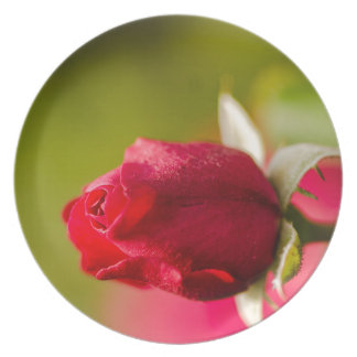 Red rose close up design plate