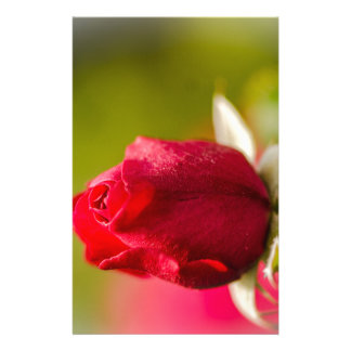 Red rose close up design stationery