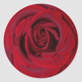 red rose close up round sticker