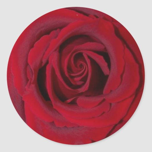 red rose close up sticker