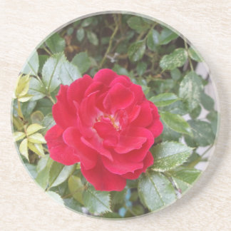 Red Rose Coasters