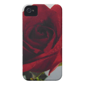 Red Rose Delight iPhone 4 Cases