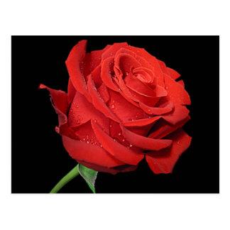 Red Rose Flower Blank Floral Black Postcard