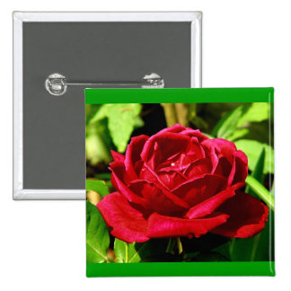 Red Rose in Bloom Button