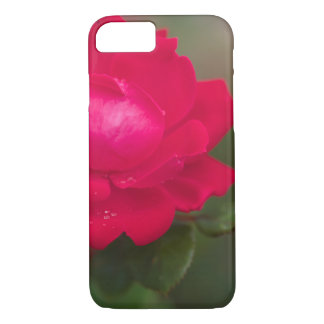 Red Rose in Bloom with Morning Dew iPhone 7 Case