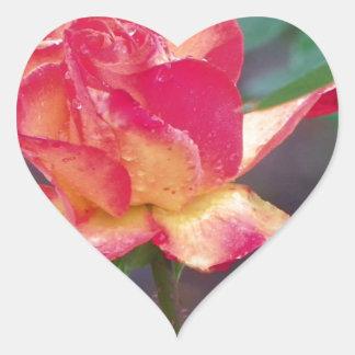 red rose in the rain heart sticker
