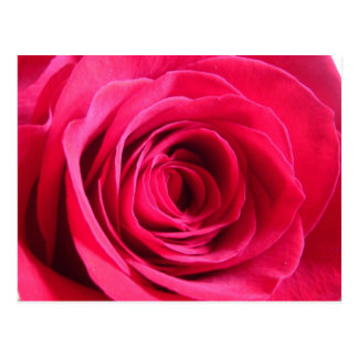 Red Rose Love Post Card