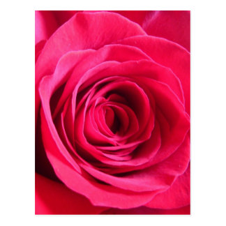 Red Rose * Love Postcard