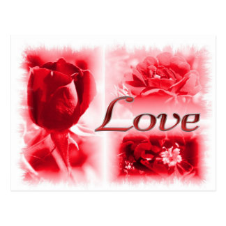 Red Rose Love Trio Postcard