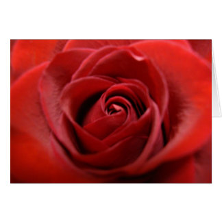 Red Rose Note Card