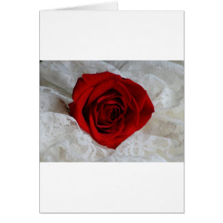 Red Rose of Love Card