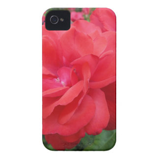 Red Rose of Love iPhone 4 Case-Mate Cases