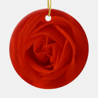 red rose of the love