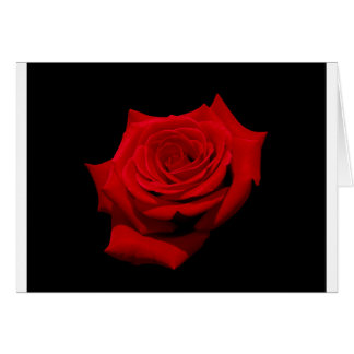 Red Rose on Black Background Card