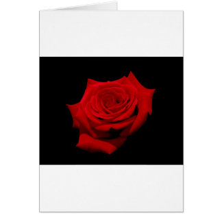 Red Rose on Black Background Card