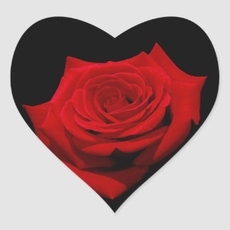 Red Rose on Black Background Heart Sticker