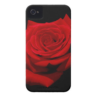 Red Rose on Black Background iPhone 4 Covers
